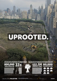 uprooted - campagne oliviers